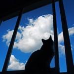 猫ちゃんヒーリングの思い出
